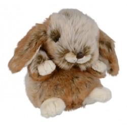 królik Baby Graham
